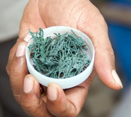 Are Sea Vegetables and Algae Safe for Your Thyroid?